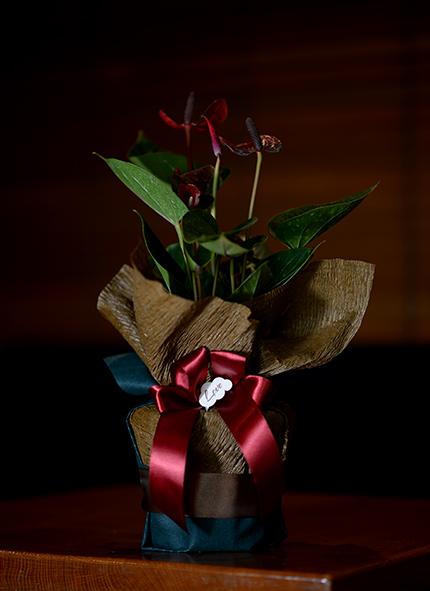 sobno cveće anturijum