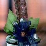sobna biljka drvo života
