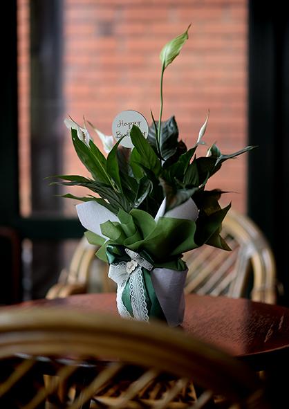 sobna biljka spatifilum
