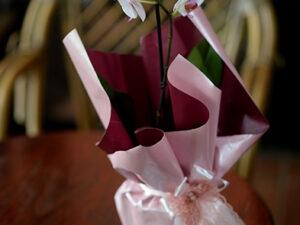 orhideja sa jednom granom