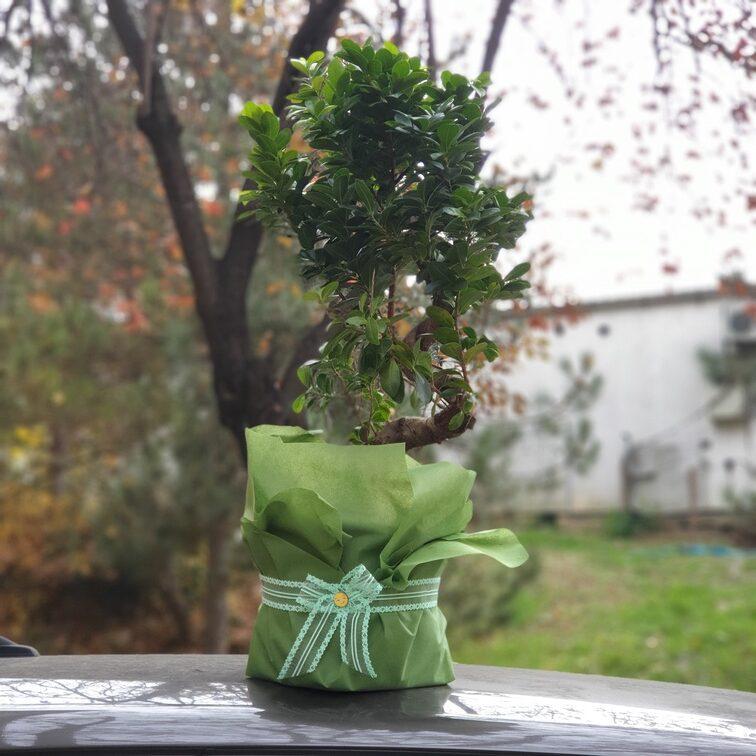 Veliko Bonsai drvo - dostava cveća Beograd - Online cvećara & Gift Shop Poklondžija